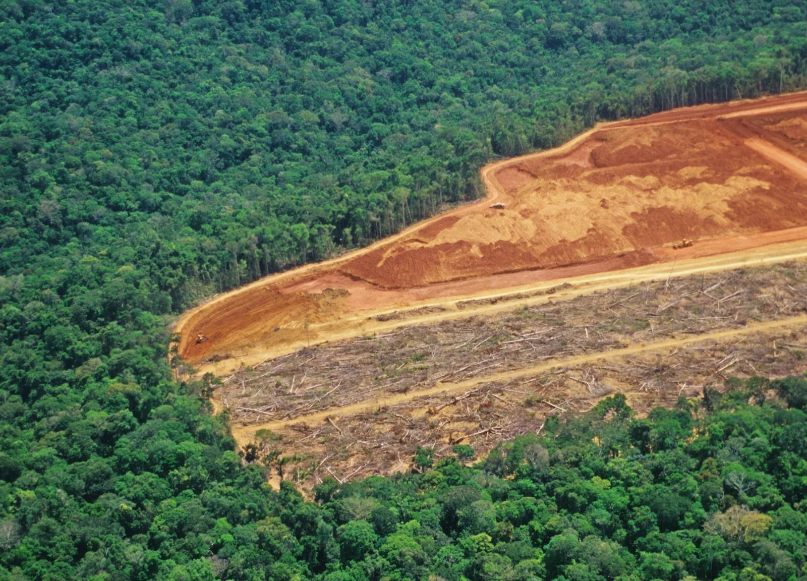 Gli incendi della foresta amazzonica e la deforestazione. Cosa possiamo fare di concreto?